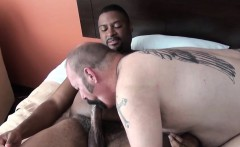 Black bear ass pounding white inked bottom